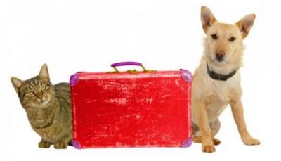 Domácí mazlíčci a dovolená: možností je dost!